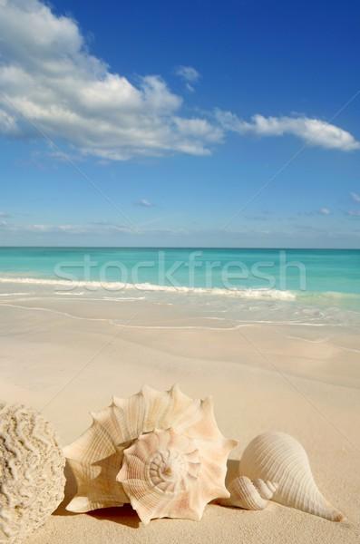 Foto stock: Mar · conchas · starfish · tropical · areia · turquesa