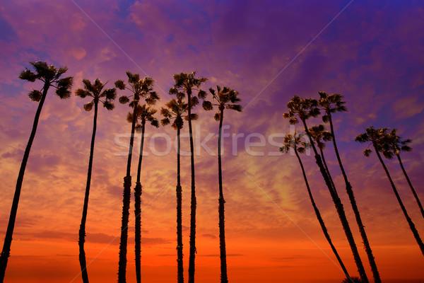 Калифорния пальмами закат красочный небе группа Сток-фото © lunamarina