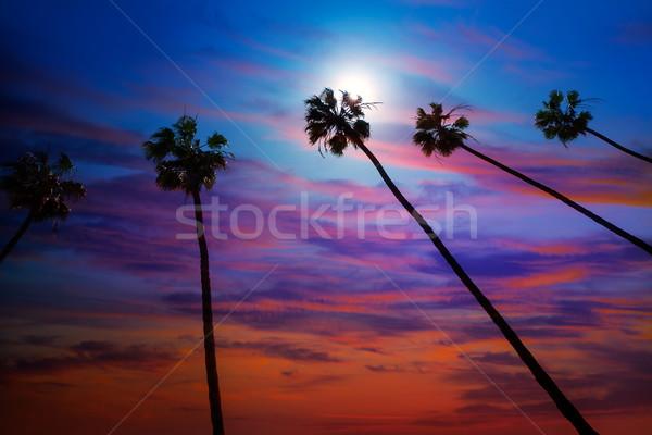 Californie palmiers coucher du soleil coloré ciel groupe Photo stock © lunamarina