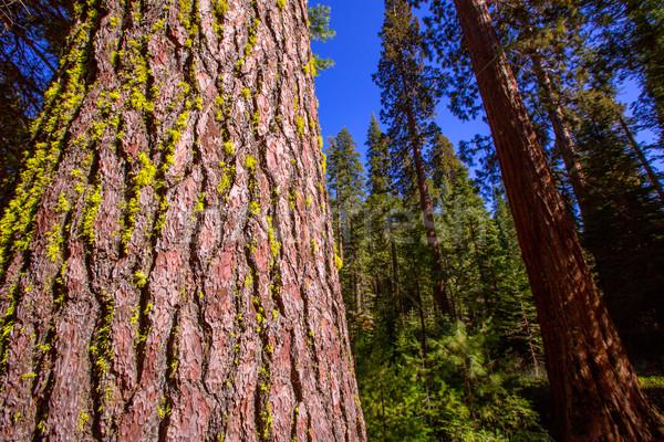 Bosje yosemite Californië yosemite national park hemel bos Stockfoto © lunamarina