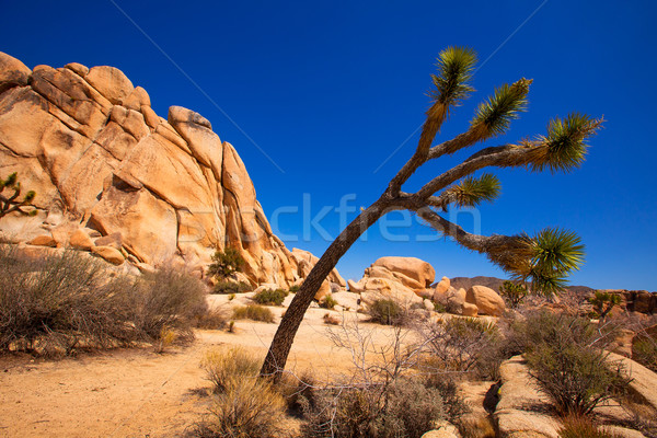 ツリー 公園 谷 砂漠 カリフォルニア ストックフォト © lunamarina