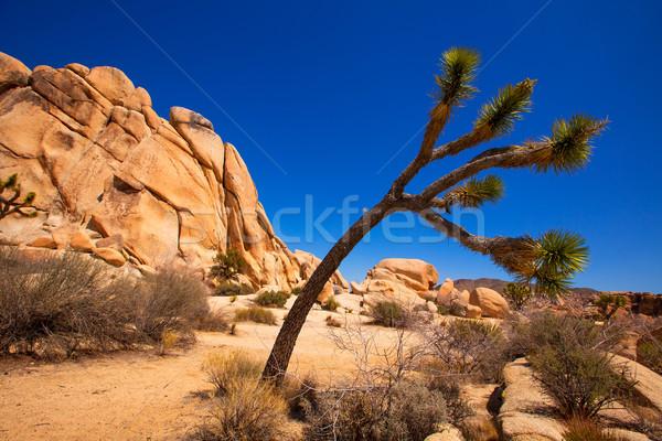 árbol parque valle desierto California Foto stock © lunamarina