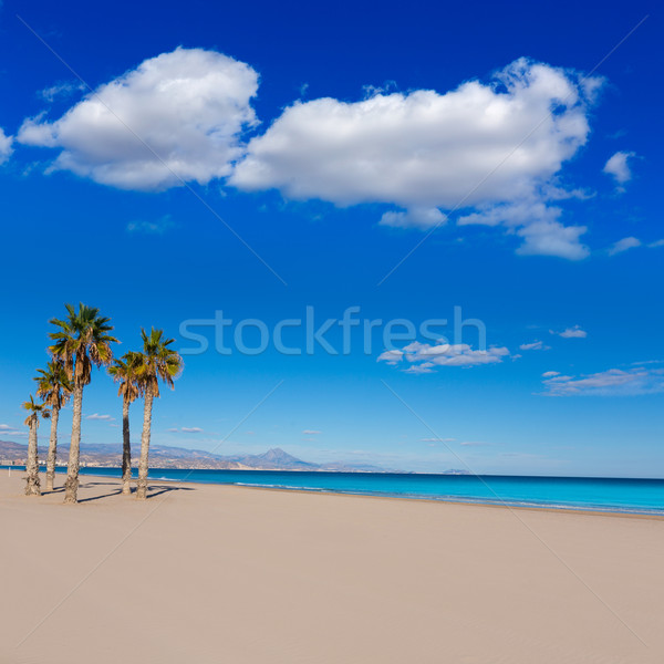 San juan strand palmen bomen middellandse zee zee Stockfoto © lunamarina