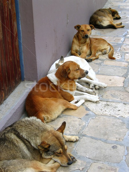 mexican street dogs lazy having a rest Stock photo © lunamarina