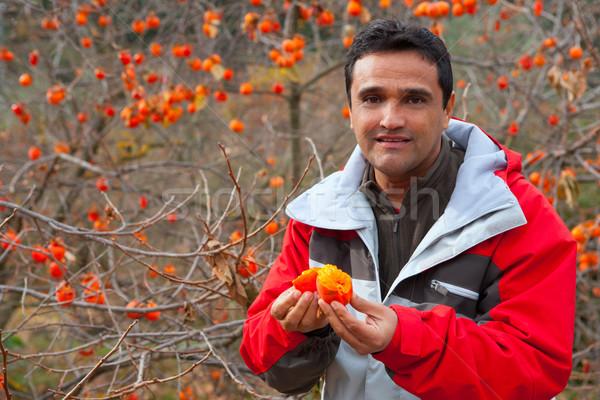 Latin farmer in autumn with persimmon fruits Stock photo © lunamarina