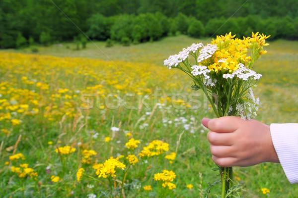 Foto stock: Ninos · mano · mantener · flores · primavera · pradera
