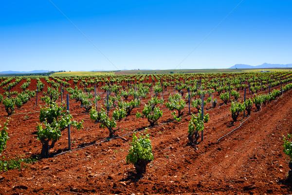 Espanha comida paisagem fundo fazenda folhas Foto stock © lunamarina