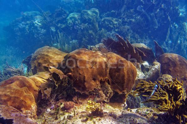 Stock fotó: Nagyszerű · Karib · Mexikó · tengerpart · tenger · háttér