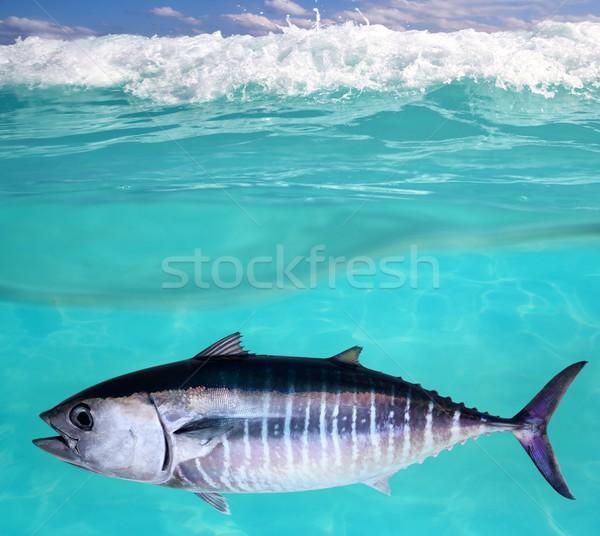 Atum peixe subaquático natação mar água Foto stock © lunamarina