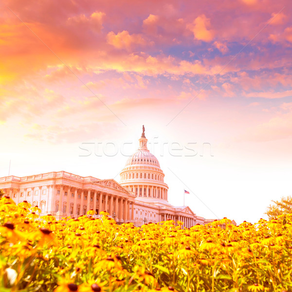 Bâtiment Washington DC Daisy fleurs USA jaune Photo stock © lunamarina