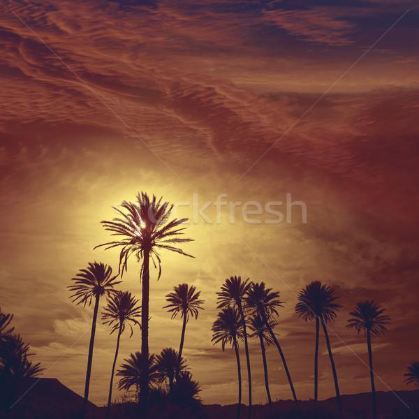 Palmiye ağaçları İspanya plaj akdeniz su bulutlar Stok fotoğraf © lunamarina