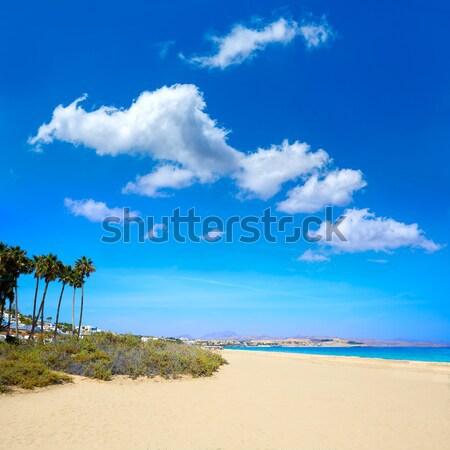 Costa Calma beach of Jandia Fuerteventura Stock photo © lunamarina