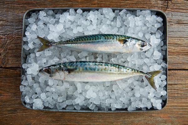 Cavala fresco peixe gelo água Foto stock © lunamarina