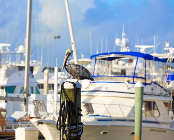 Fort lauderdale oiseau marina Floride pôle USA Photo stock © lunamarina