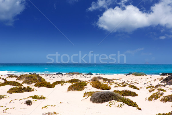 Foto stock: Areia · branca · praia · canárias · céu · água · natureza