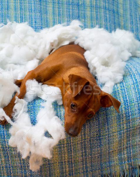 Huncut játékos kutyakölyök kutya harap párna Stock fotó © lunamarina