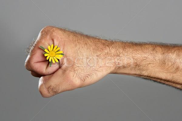Gegensatz haarig Mann Hand Blume Frühlingsblume Stock foto © lunamarina