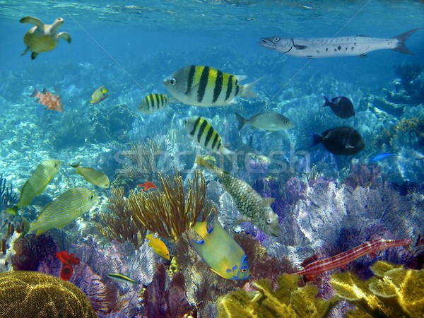 caribbean reef tropical fishes underwater  Stock photo © lunamarina