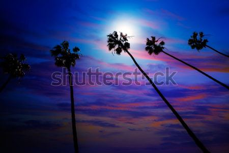 California palm trees on blue sky Stock photo © lunamarina