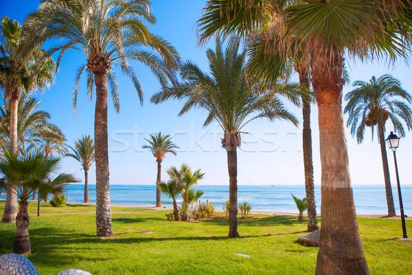 Oropesa de Mar in Castellon palm tree garden in mediterranean  Stock photo © lunamarina