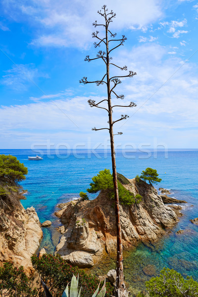 Platja Fenals Beach in Lloret de Mar Costa Brava Stock photo © lunamarina