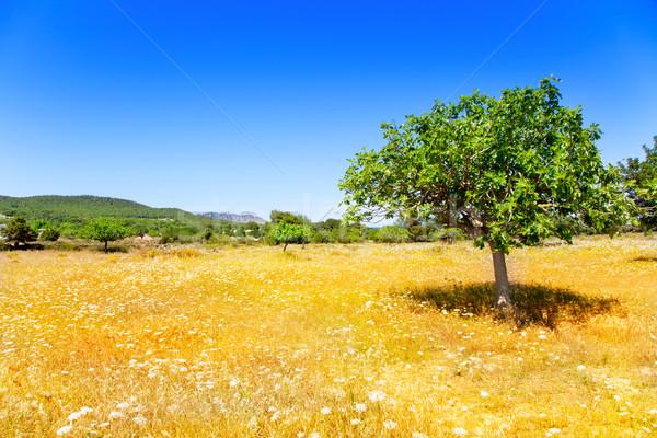 Photo stock: Agriculture · arbre · blé · or