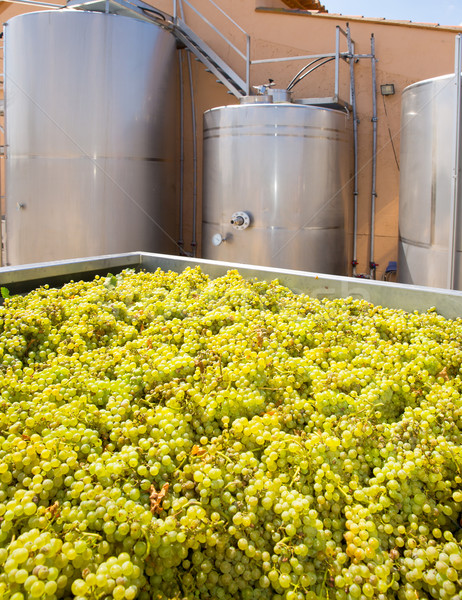 chardonnay winemaking with grapes and tanks Stock photo © lunamarina