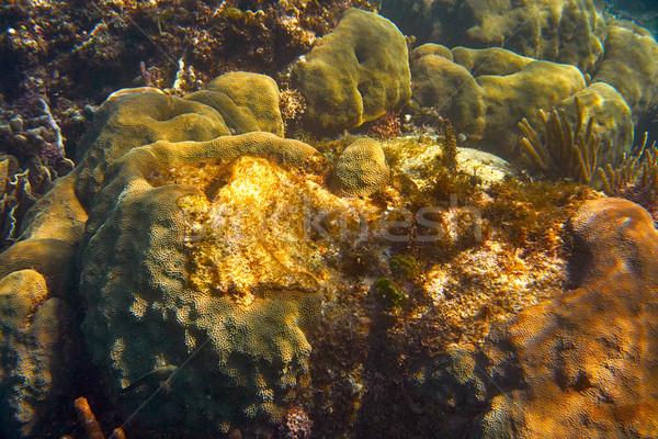 Mesoamerican barrier Great Mayan Reef Stock photo © lunamarina