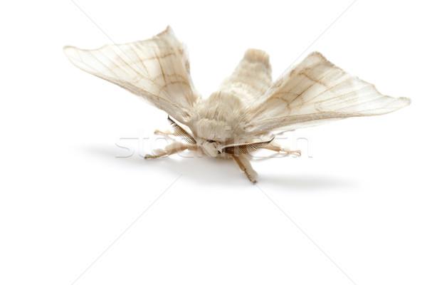 Farfalla bianco seta worm isolato industria Foto d'archivio © lunamarina