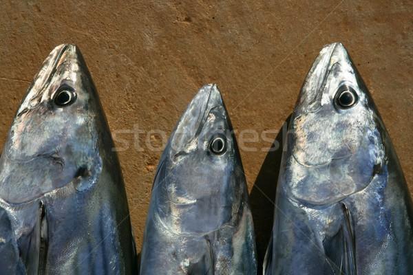 Bonito, skipjack tuna, Sarda Sarda in a row Stock photo © lunamarina