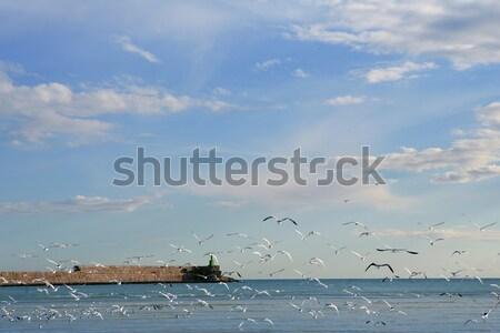 Niebieski morze Śródziemne widoku mewa pływające plaży Zdjęcia stock © lunamarina