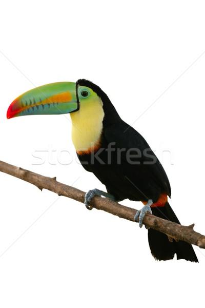 鳥 カラフル 白 ツリー 自然 緑 ストックフォト © lunamarina