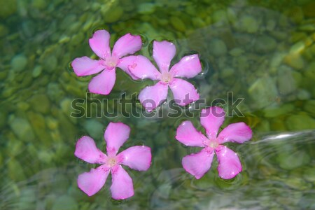 Oleander pink flowers floating in natural freshwater Stock photo © lunamarina