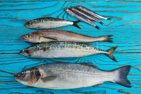 Fresco peixe cavala água Foto stock © lunamarina