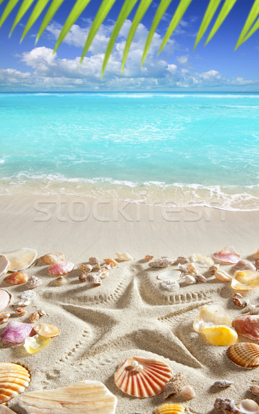 beach sand starfish print caribbean tropical sea Stock photo © lunamarina