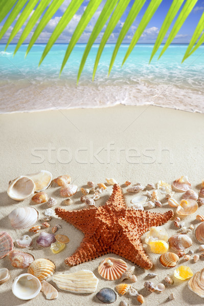 Plage de sable starfish Caraïbes tropicales mer vacances d'été Photo stock © lunamarina