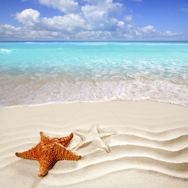 Photo stock: Caraïbes · plage · tropicale · sable · blanc · starfish · shell · ondulés