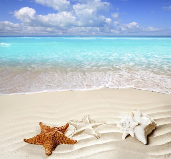 Imagine de stoc: Insulele · Caraibe · plaja · tropicala · nisip · alb · steaua · de · mare · coajă · ondulat