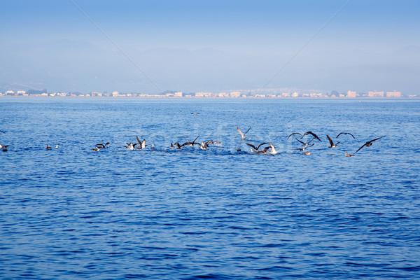 blue sea seagulls hunting sardine fish Stock photo © lunamarina