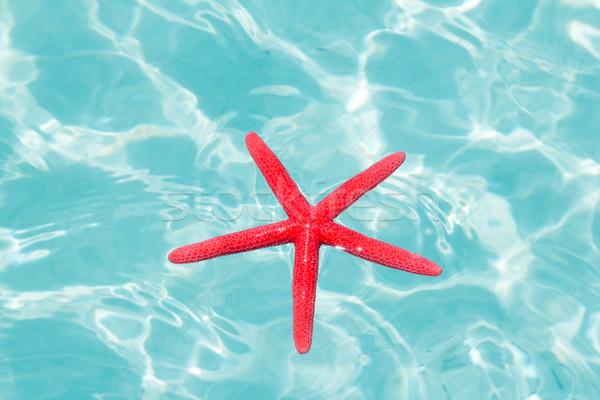 Photo stock: Rouge · starfish · parfait · tropicales · mer