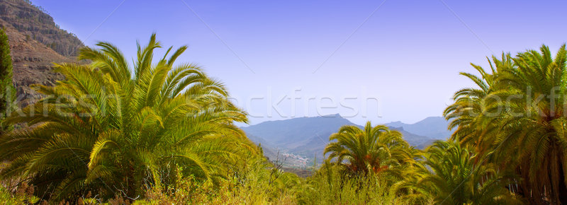 канарейка пальма гор феникс природы Сток-фото © lunamarina