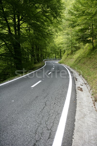 Stock photo: Asphalt winding curve road in a beech forest