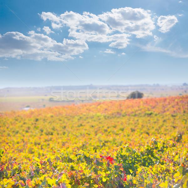 Foto stock: Outono · dourado · vermelho · pôr · do · sol · céu · comida