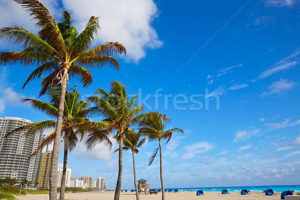 énekes sziget tengerpart pálma Florida pálmafák Stock fotó © lunamarina