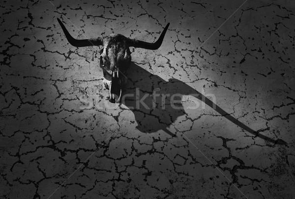 Stier hoofd skelet muur schaduw Stockfoto © lunamarina