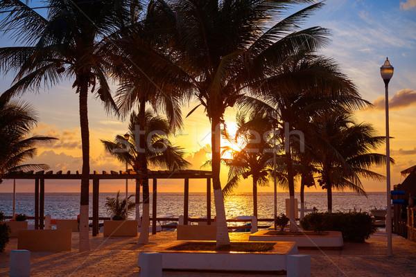 Foto stock: Amanecer · playa · palmeras · México · agua · luz