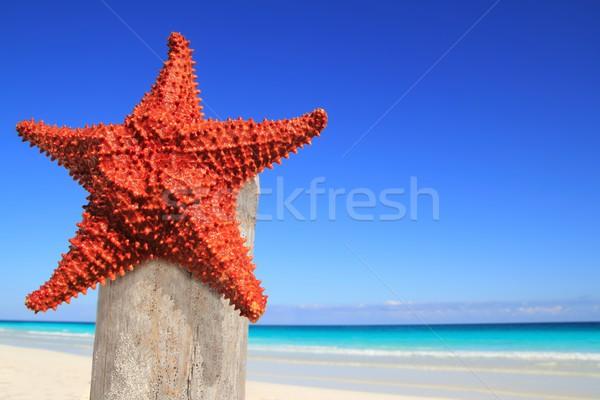Карибы Starfish древесины полюс пляж красивой Сток-фото © lunamarina
