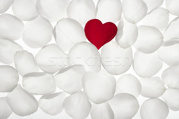 Red rose petal heart shape over white Stock photo © lunamarina