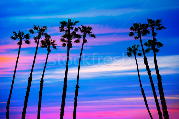 Photo stock: Californie · palmiers · coucher · du · soleil · coloré · ciel · groupe