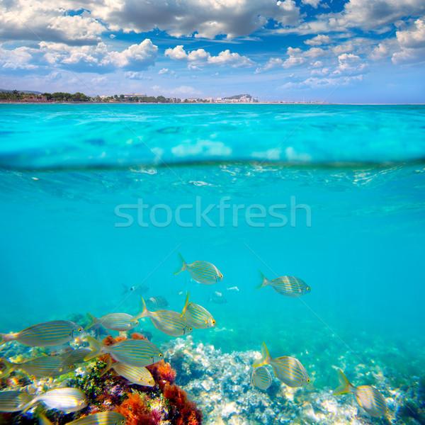 Denia Alicante Marineta Casiana beach fishes underwater Stock photo © lunamarina
